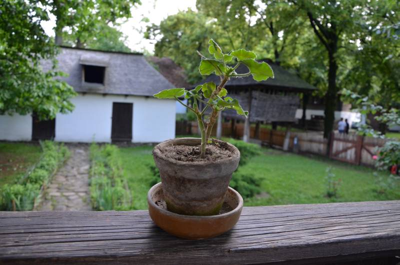 Muzeul Satului Bucuresti (37)