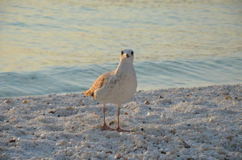 Plaja de Marmura Marble Beach Thasos (15)