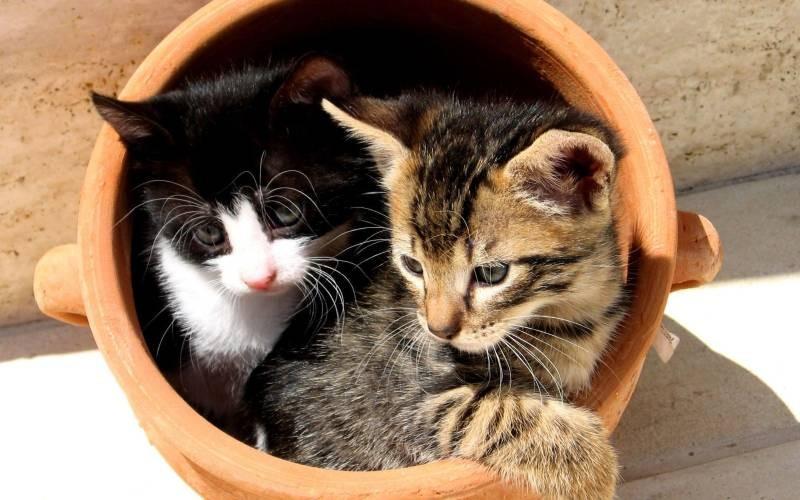 poze pisici (10)