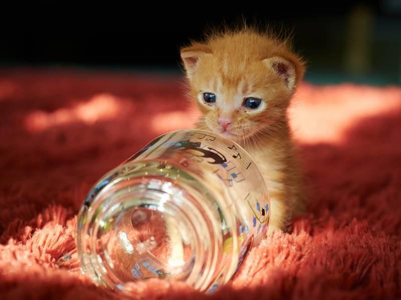 poze pisici (100)