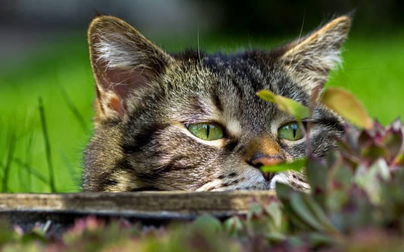 poze pisici (101)