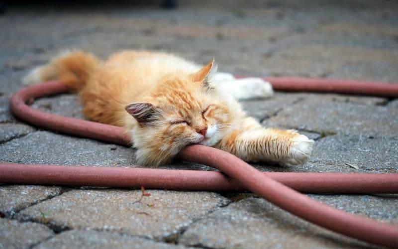 poze pisici (102)