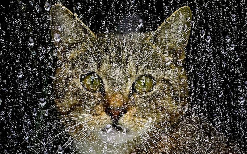 poze pisici (103)