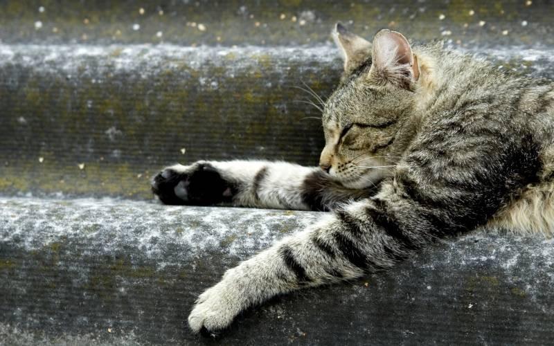 poze pisici (104)