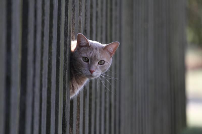 poze pisici (105)
