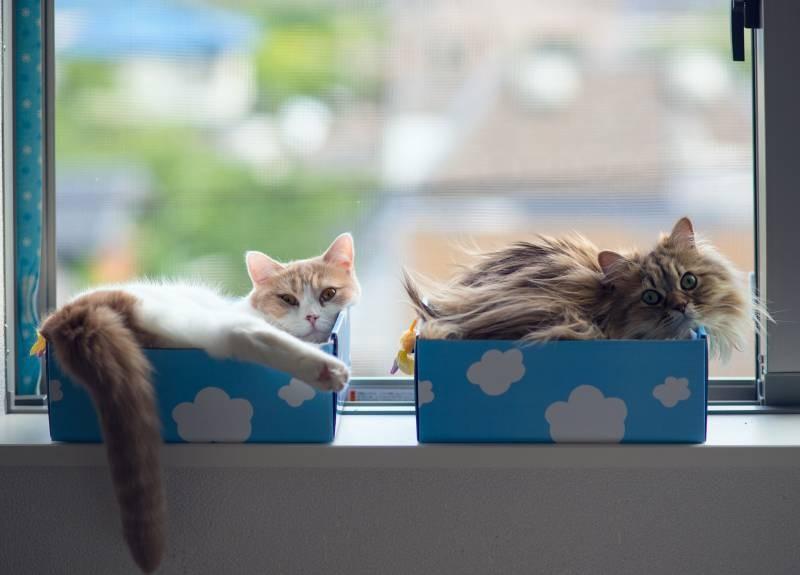 poze pisici (106)