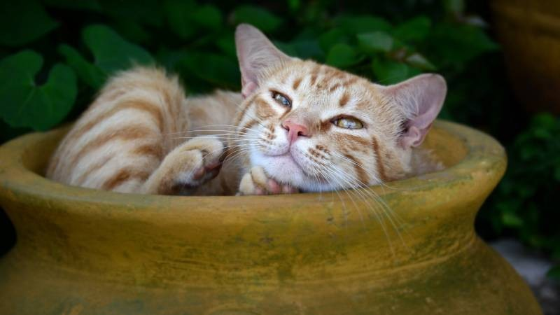 poze pisici (107)