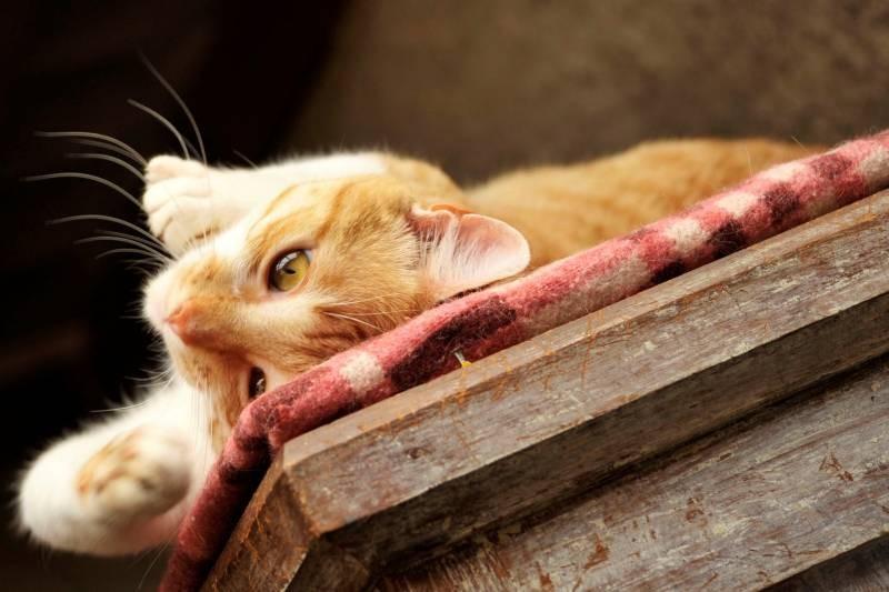 poze pisici (108)