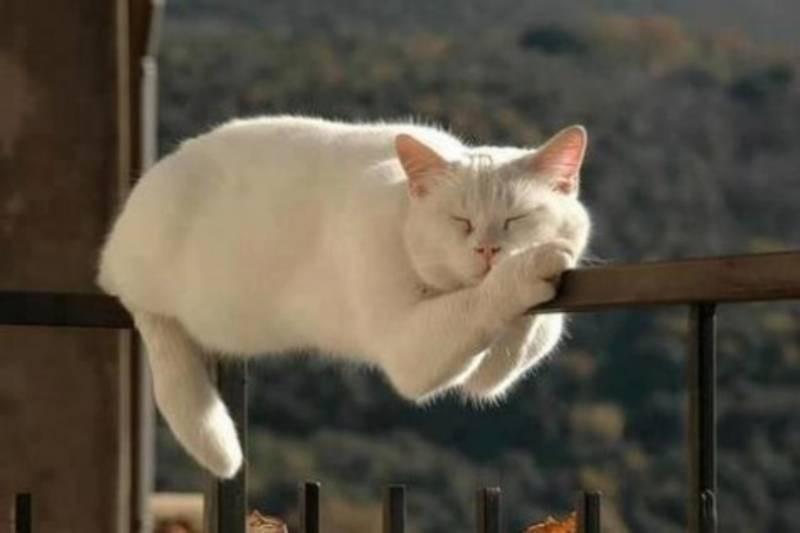 poze pisici (109)