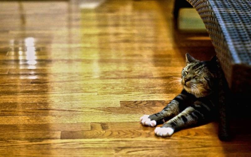 poze pisici (110)