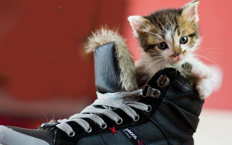 poze pisici (111)