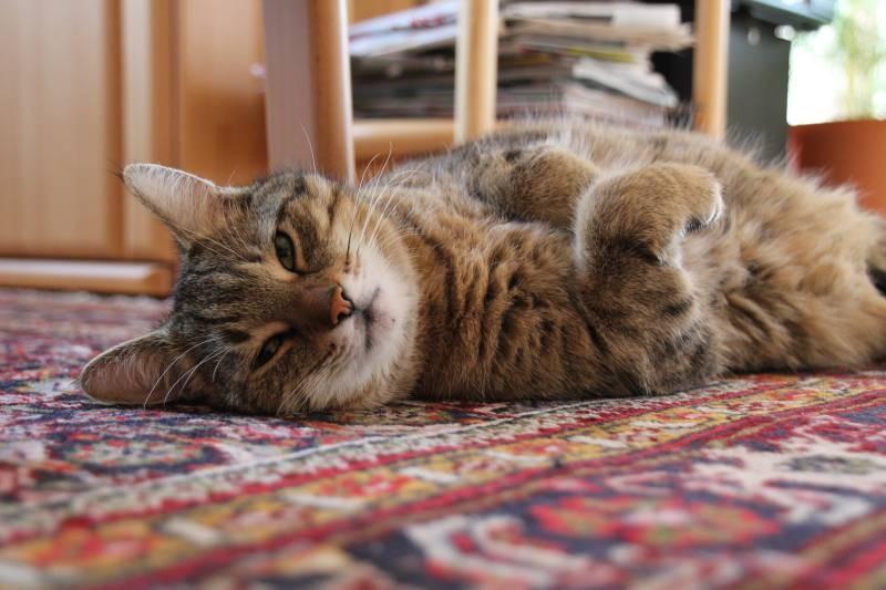 poze pisici (112)