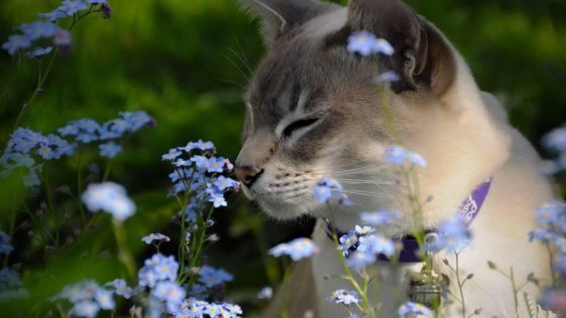 poze pisici (113)