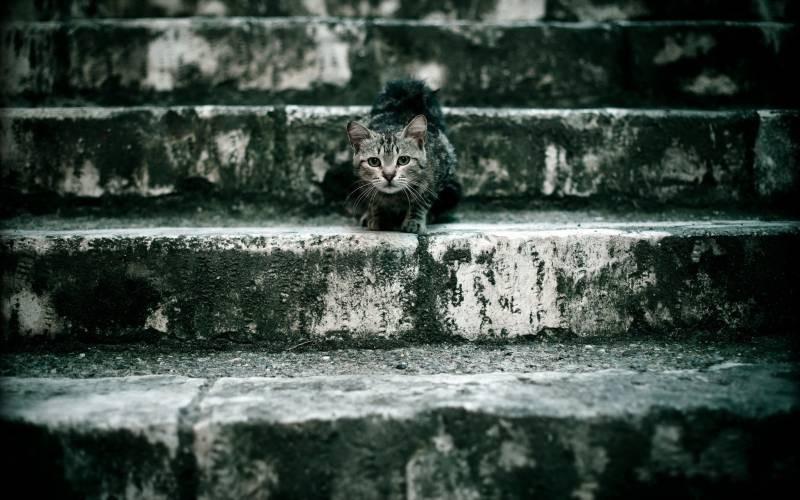 poze pisici (116)