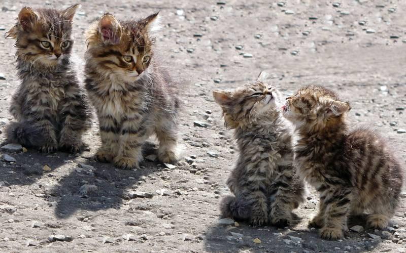 poze pisici (118)