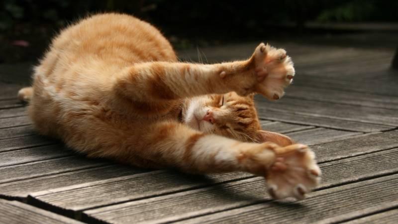 poze pisici (120)