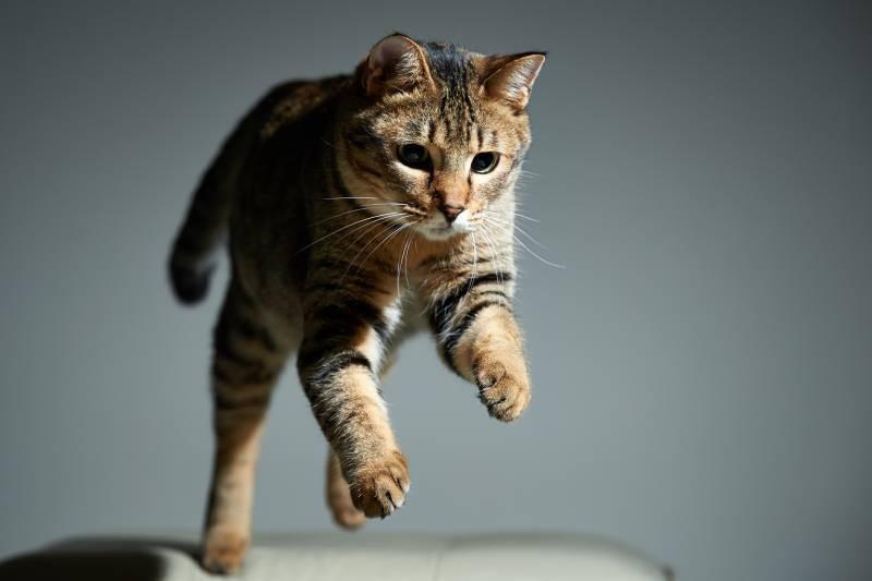 poze pisici (122)
