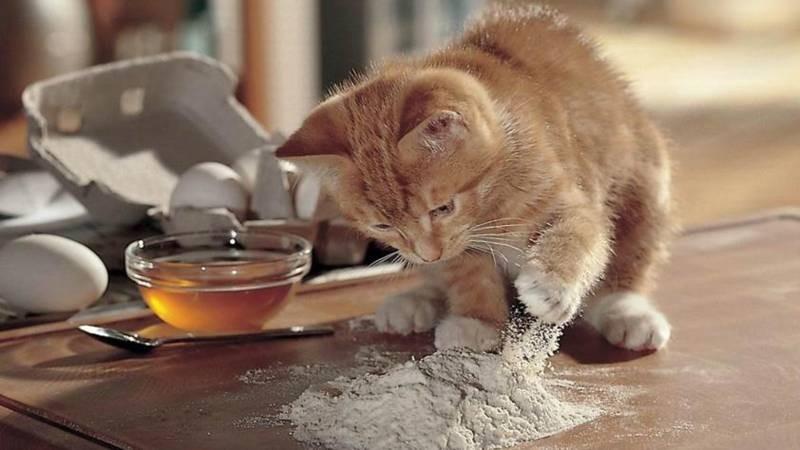 poze pisici (125)