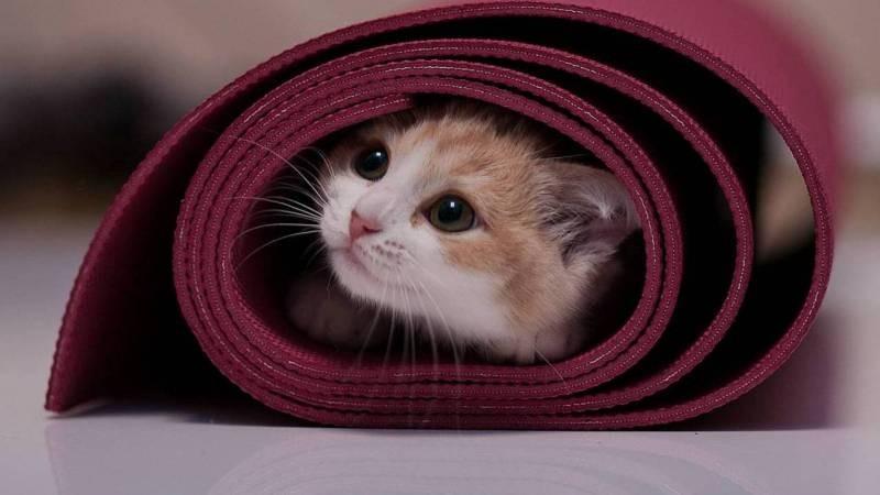 poze pisici (126)