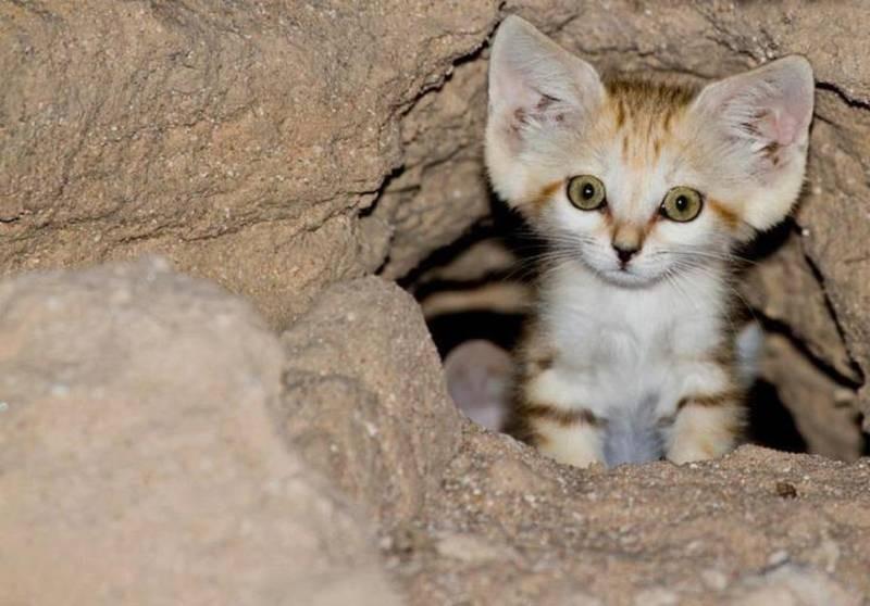 poze pisici (129)