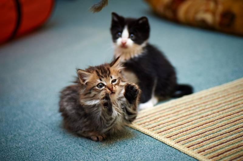 poze pisici (131)