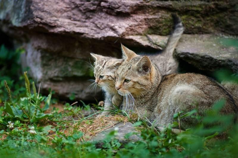 poze pisici (133)