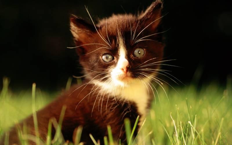 poze pisici (135)