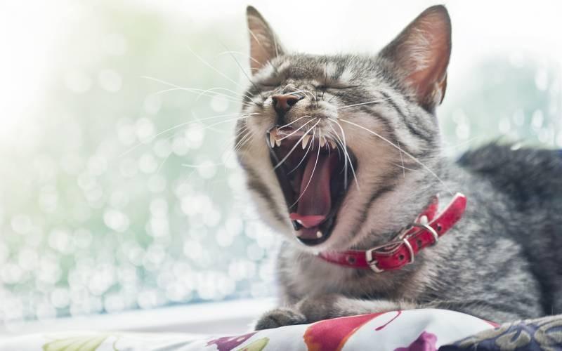 poze pisici (136)