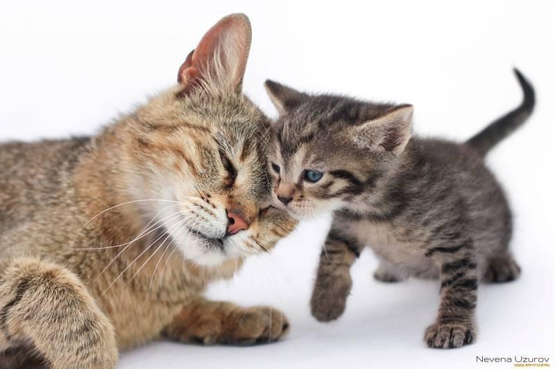 poze pisici (137)