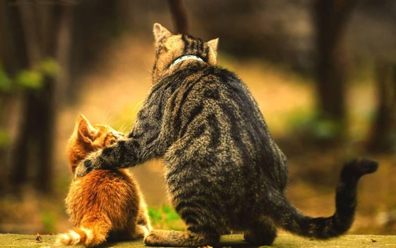poze pisici (139)