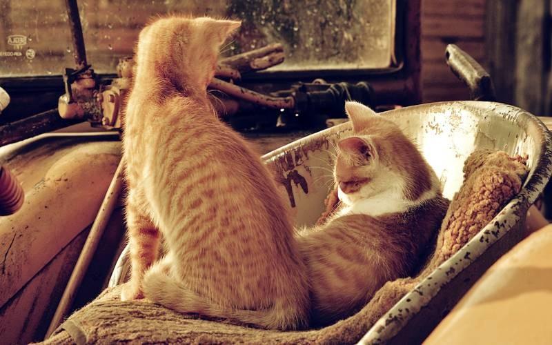 poze pisici (14)