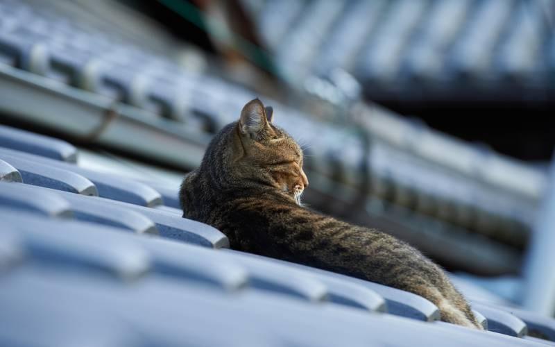 poze pisici (140)