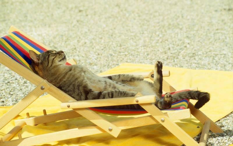 poze pisici (141)