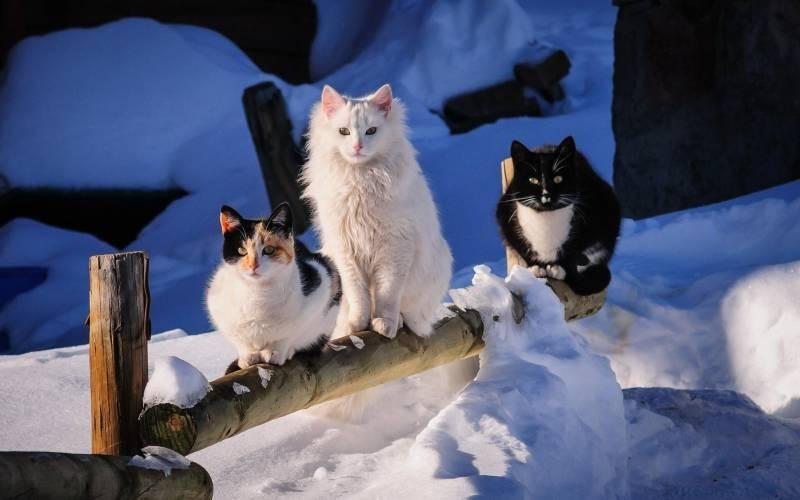 poze pisici (142)