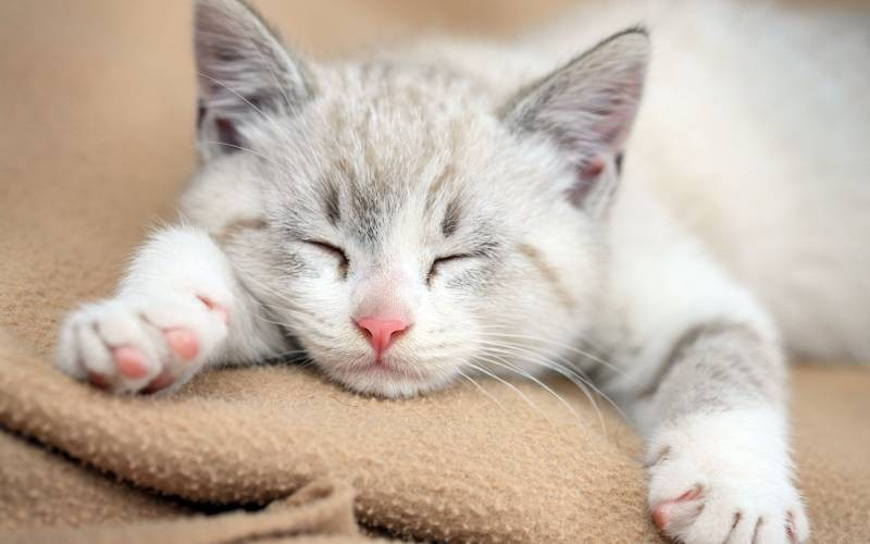 poze pisici (143)