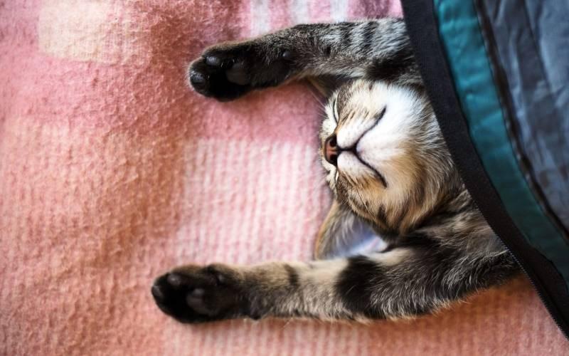 poze pisici (144)
