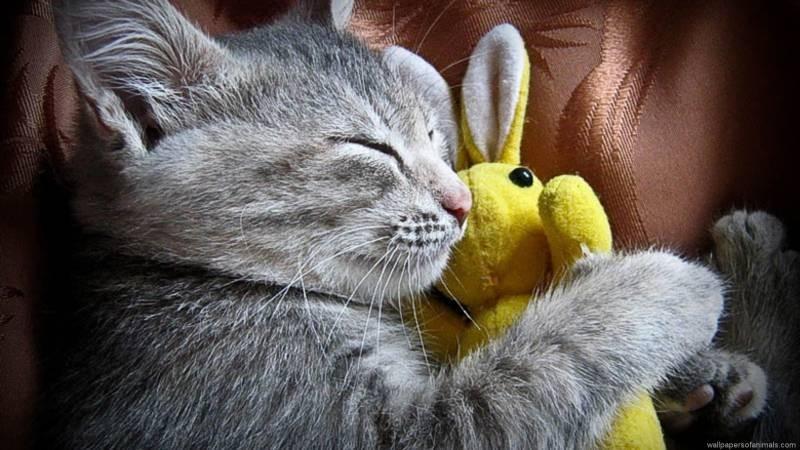 poze pisici (145)