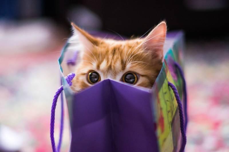 poze pisici (148)