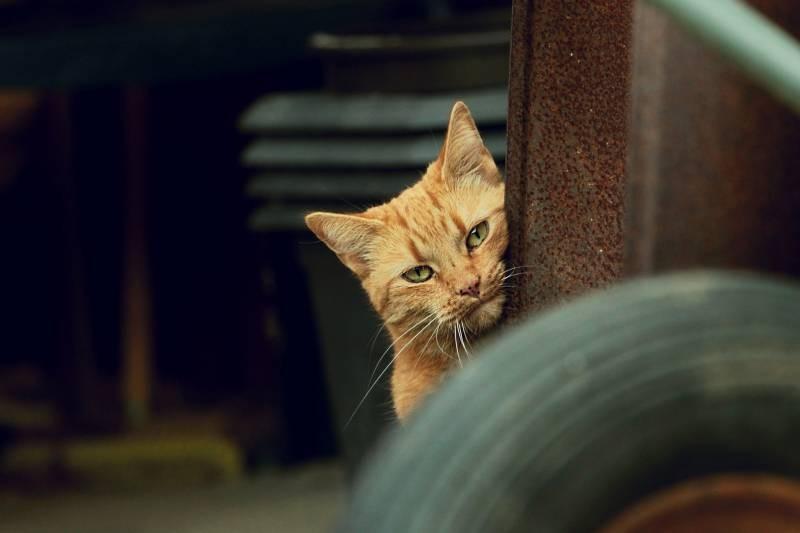 poze pisici (149)