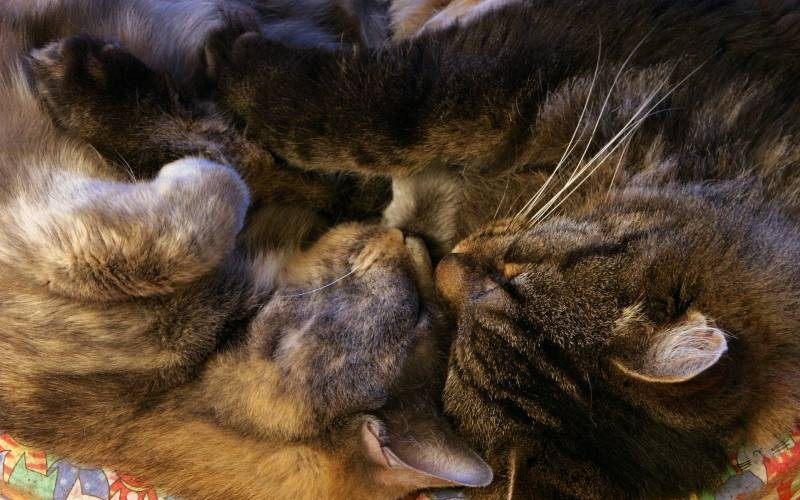 poze pisici (15)