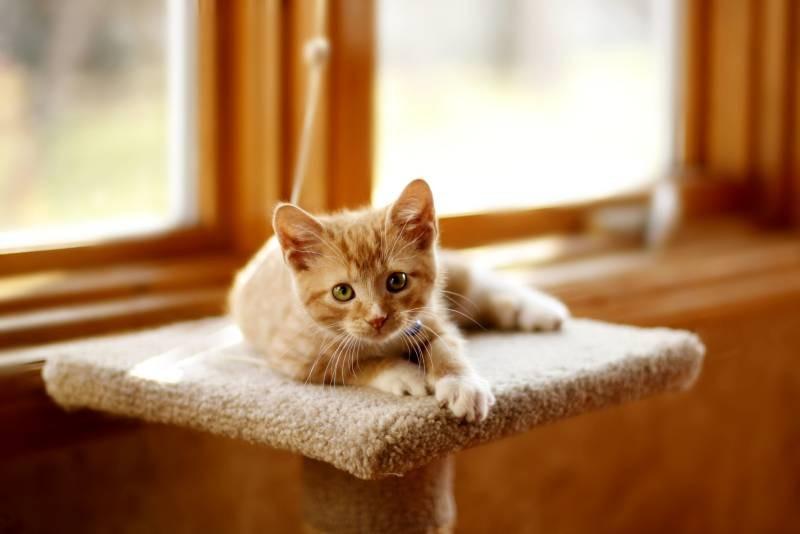 poze pisici (152)