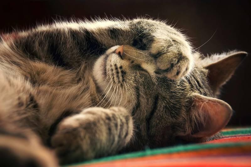 poze pisici (154)
