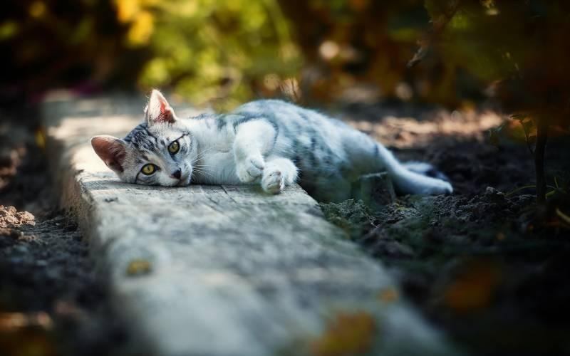 poze pisici (155)
