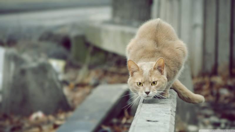 poze pisici (156)