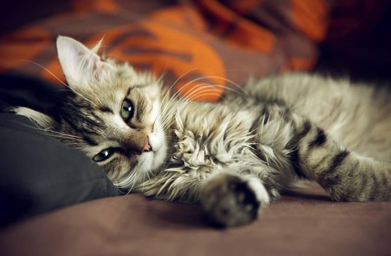 poze pisici (157)