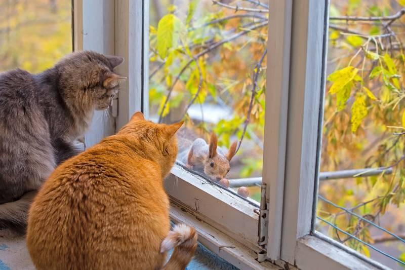 poze pisici (158)