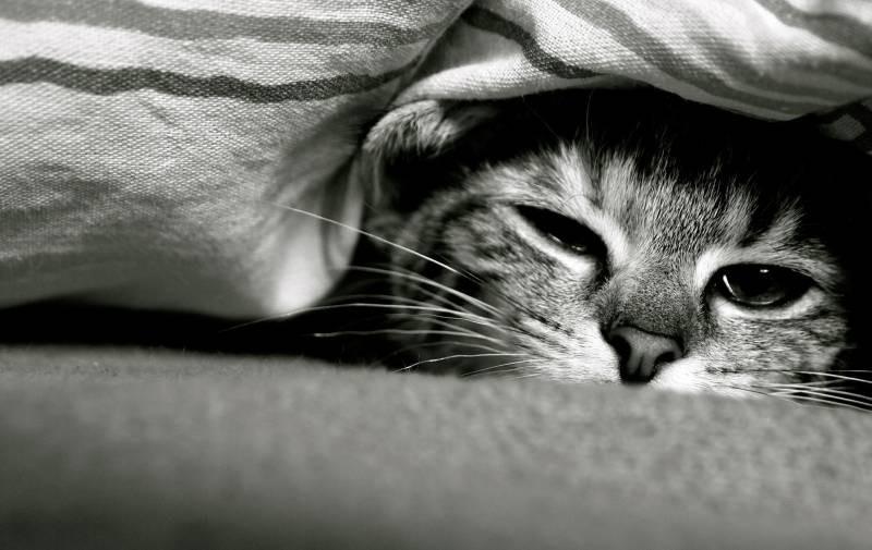 poze pisici (16)