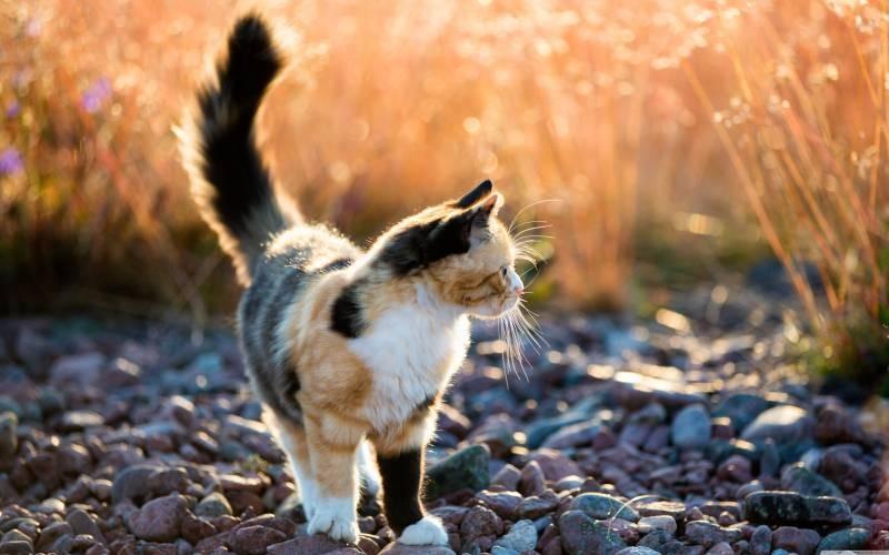 poze pisici (160)
