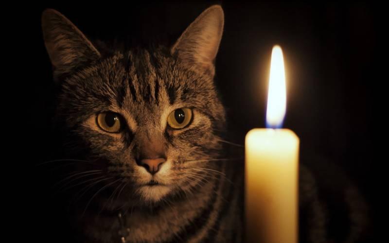 poze pisici (162)