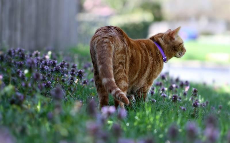 poze pisici (163)